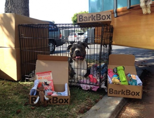 Order a Bark Box & Support Downtown Dog Rescue