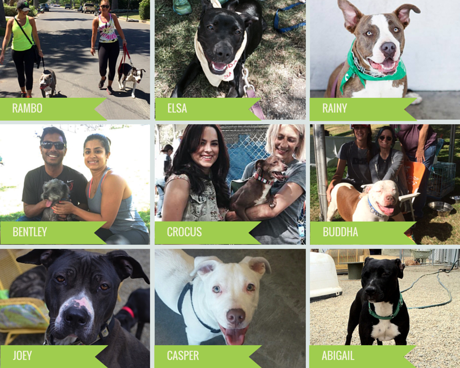 Downtown Dog Rescue - NKLA Adoption Weekend 2015