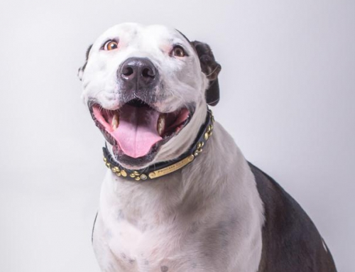 Daisy Wants A Home. We Need Your Help To Give Her One.