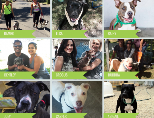 2 days, 10 dogs = Great adoption weekend!