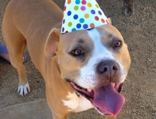 Happy third birthday to SIP!