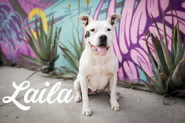 Downtown Dog Rescue – Los Angeles Dog Rescue
