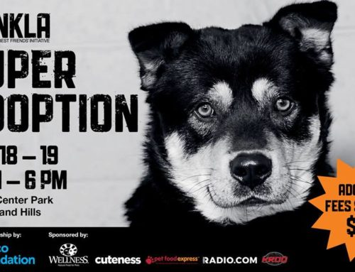 Super Adoption Sunday May 19th