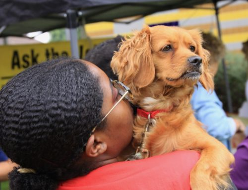 August South LA Dog Clinic