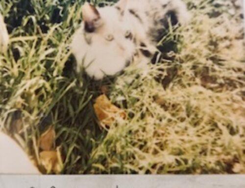 Mickey the Calico Kitty